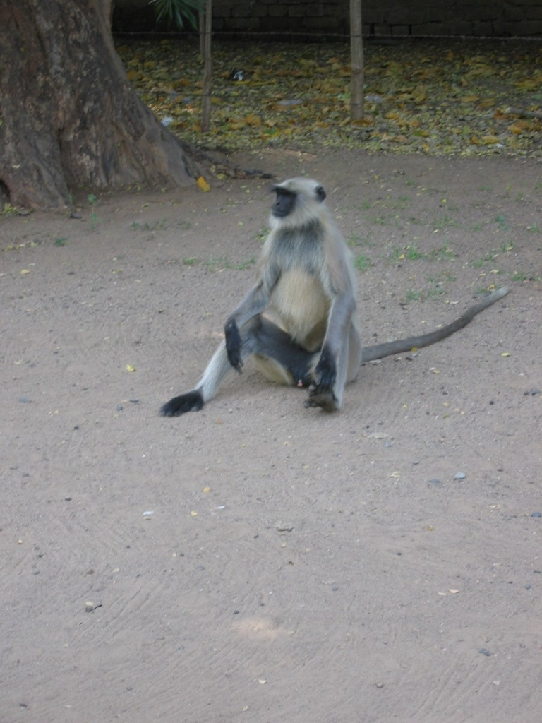 Ja vapaa-apina