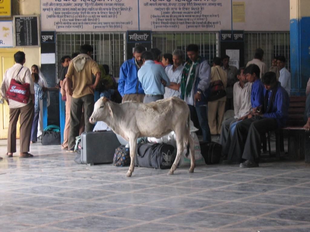 Chittorgarhin asemalla oli kaikenlaista matkustajaa