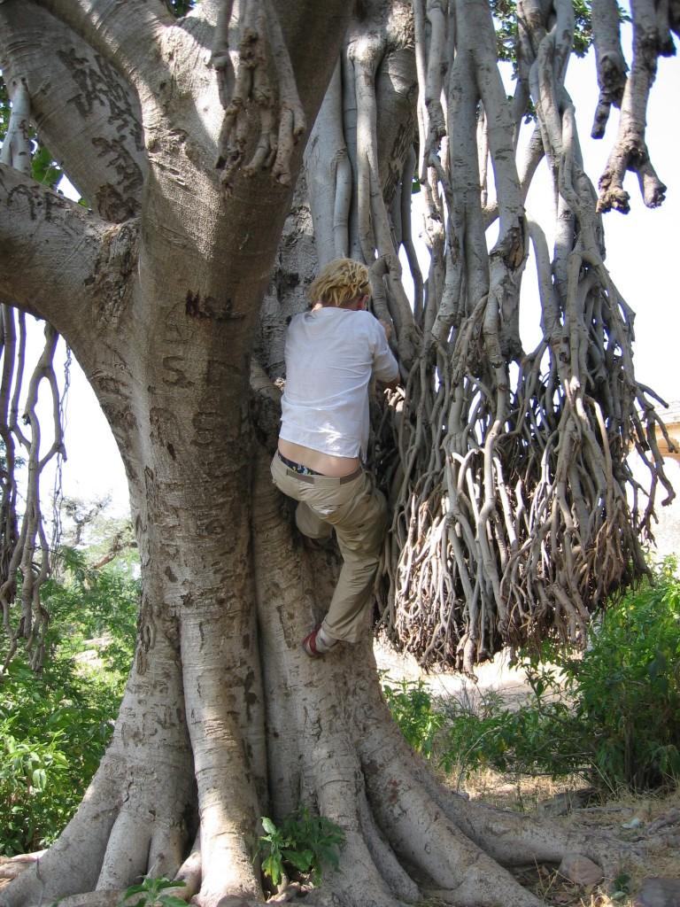 Kyllä vähän kuumeessakin nyt puuhun jaksaa kiivetä