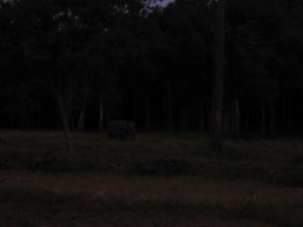 Kyllä... se harmaa möykky on norsu