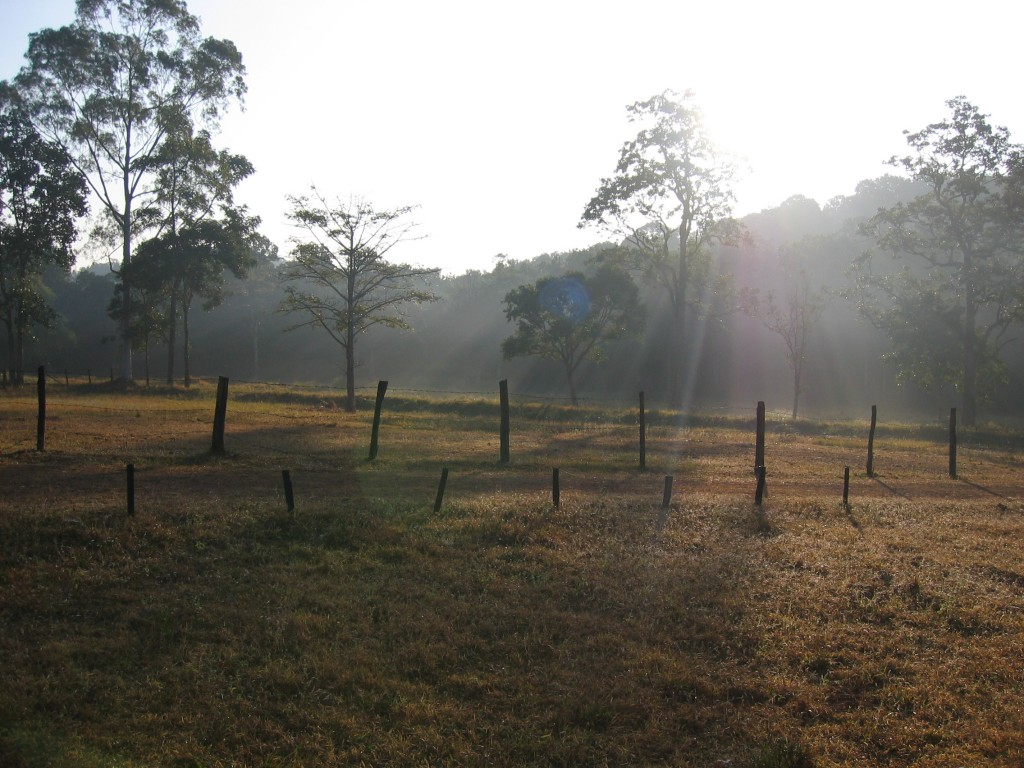 Aamu valkenee puistossa