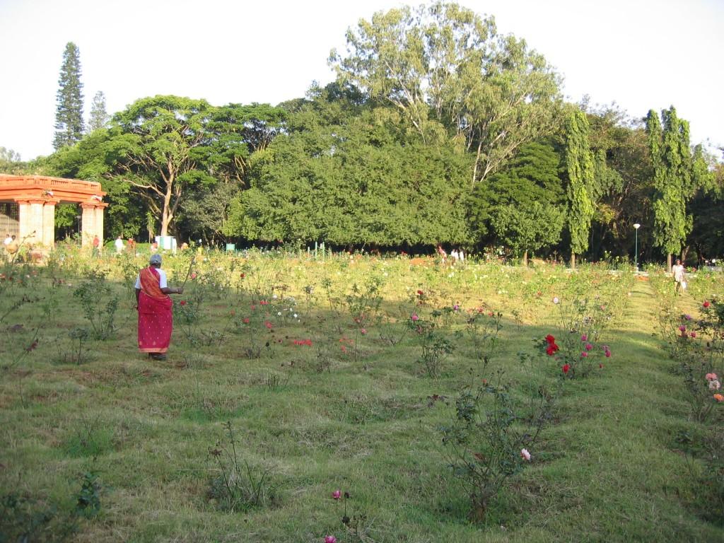 Ruusutarha Bangaloressa