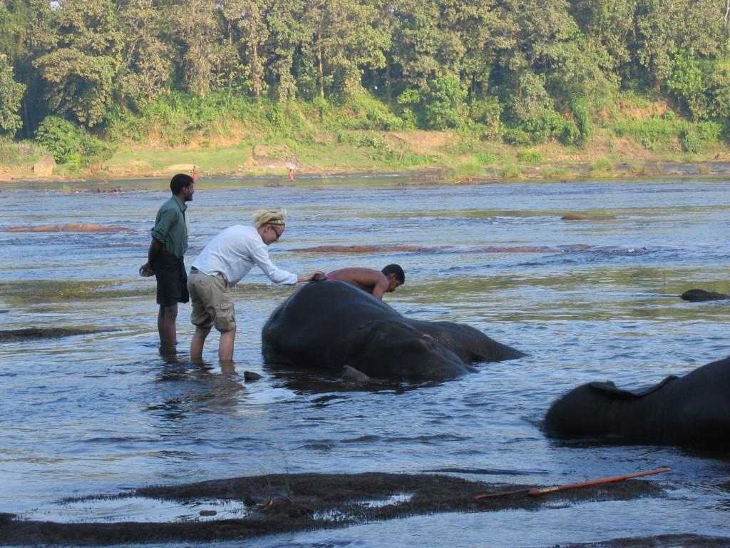 Mikko pesemässä norsua