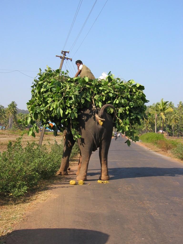 Tämä norsu sen sijaan oli ihan oikeassa työssä