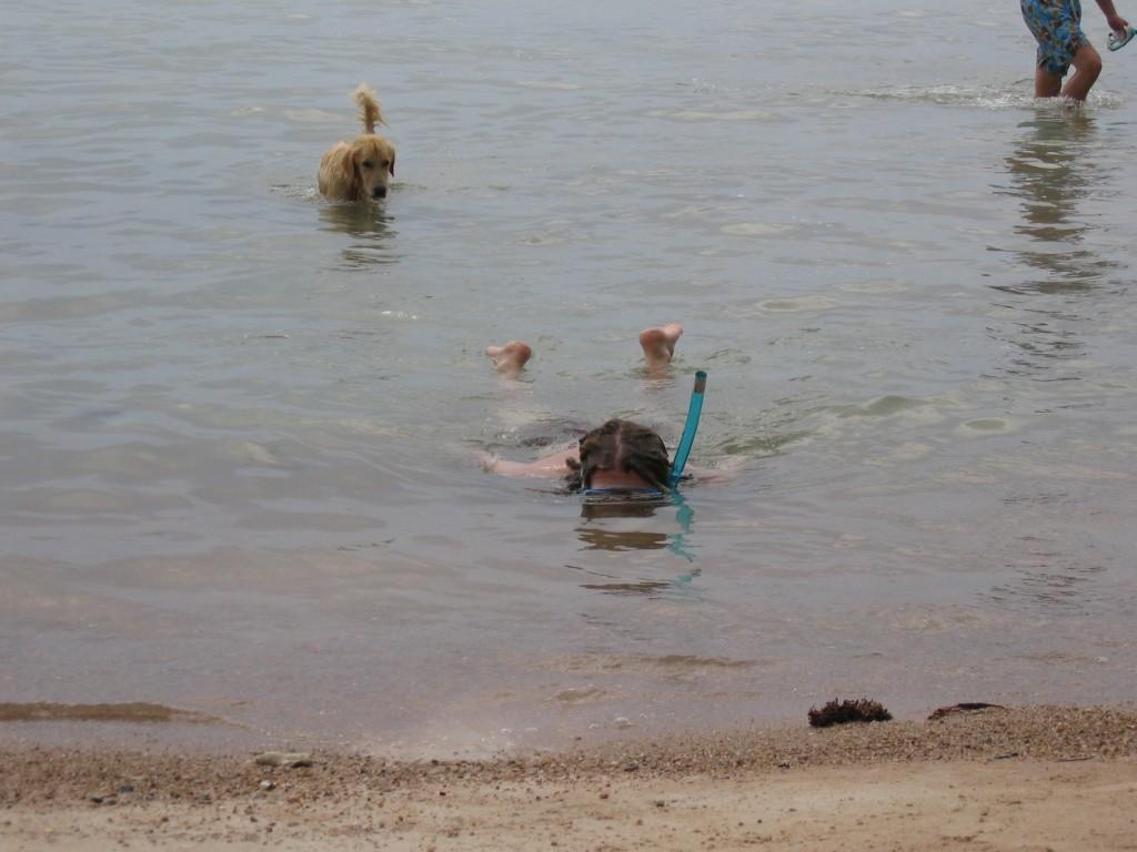 Mikko pysytteli suosiolla matalammassa vedessä