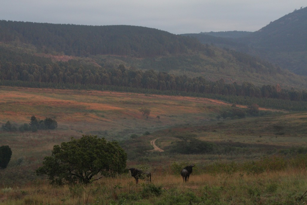 Gnu. Eläinbongaus ei ollut ihan Krugerin tasoa.