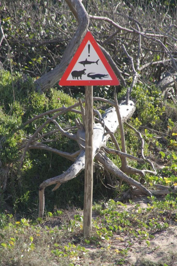 Sodwana Bayn rannalla saattaa olla kaikennäköistä mönkijää