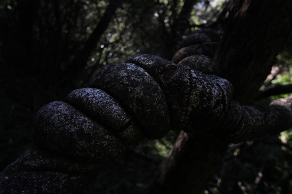 Jännä puusolmu matkalla Thugela Gorgeen
