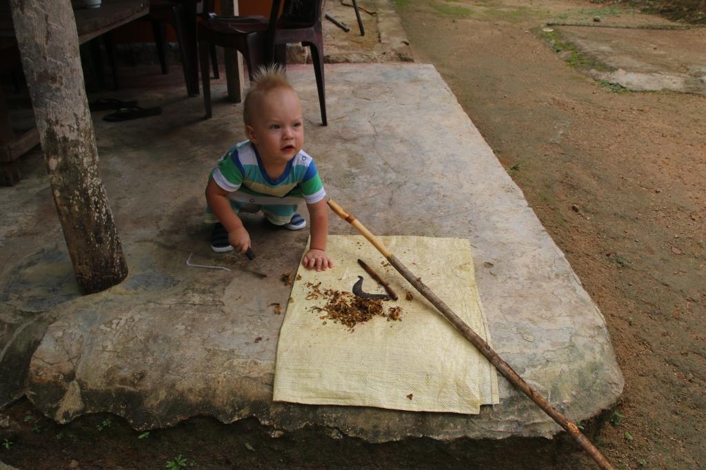 Kanelin käsittelyä / Cinnamon-making
