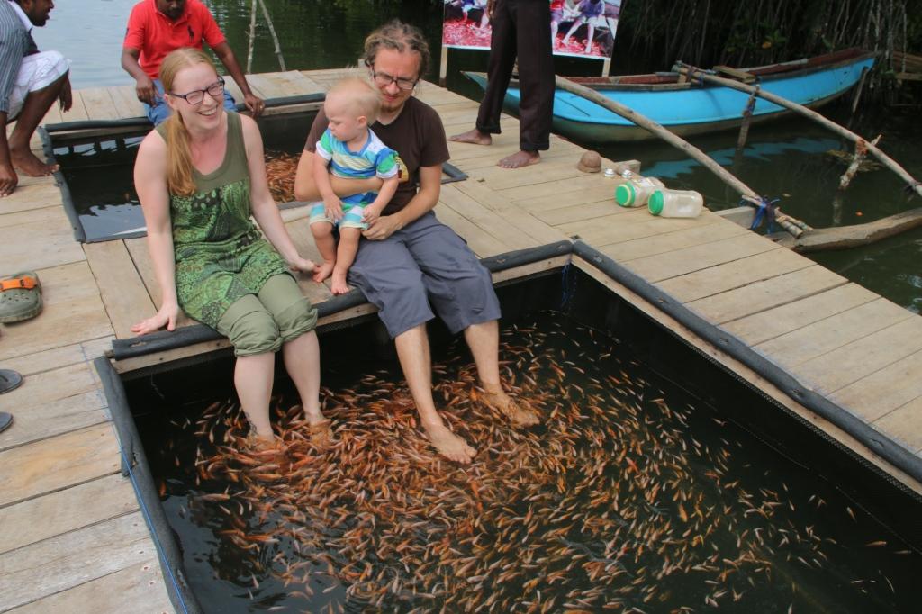 Kalakylpylä / Fish spa