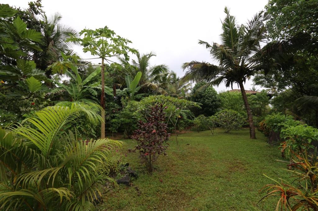 Tilusten puutarha. Siellä on monenlaista kukkaa ja sitten hyötykasveina kookosta ja banaania.