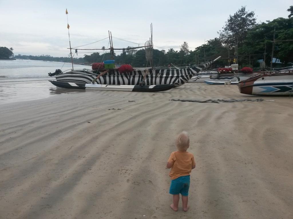Weligaman rannasta löytyi seepravene.