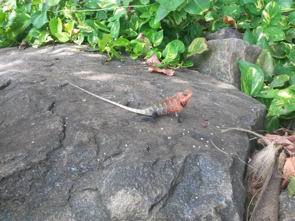Tällaisia hienoja gekkoja (kait) näkyy toisinaan