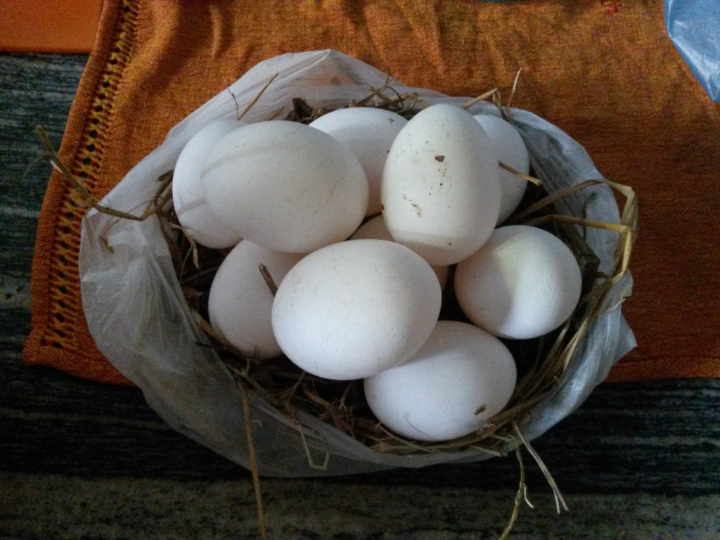 Got fresh eggs? These ones are still in the nest :)