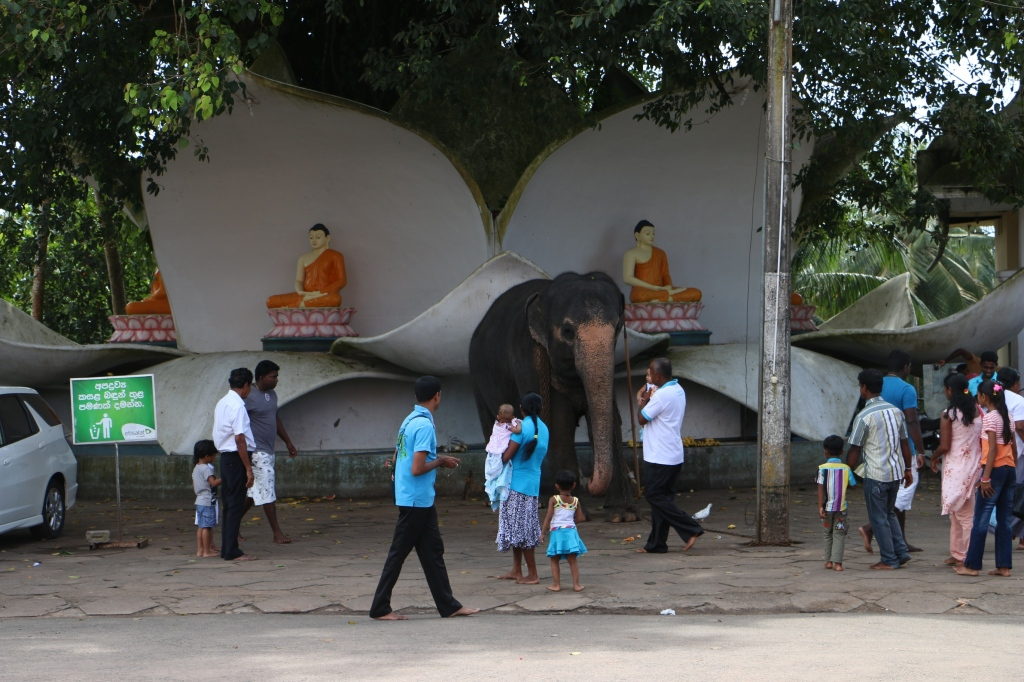 The temple elephant at Kande Viharaya