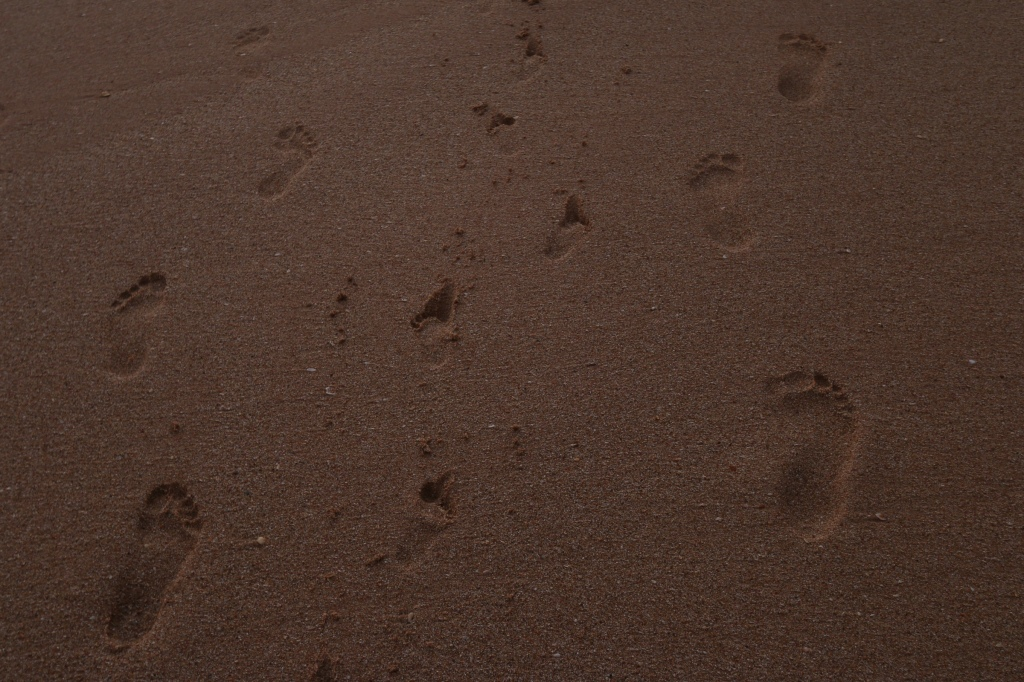 Family footmarks on Balapitiya beach