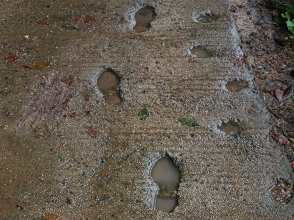 Santa's footprints in the sno..., err, pavement