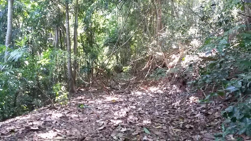 Ensimmäiset aurinkoiset päivät veivät Kandyn keskustan vieressä olevaan Udawattakelen metsikköön. Osa siitä on hieman rämeikköistä ja täältäkin löytyy oma osansa iilimatoja.