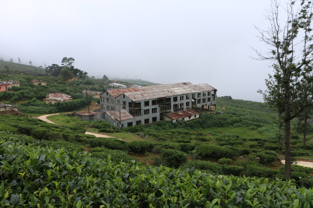 Abandoned tea factory